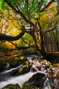 ~~Of the Earth • autumn at Tollymore Forest, Northern Ireland by Alan Owens~~
