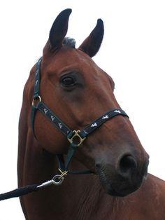 Paardenshop.nl View paardensport artikelen uit de meest trendy assortiment online. Goedkope aanbiedingen voor paardrijden apparatuur.