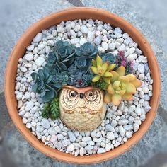 Join fellow succulent enthusiasts in this new Instagram challenge! This creative succulent arrangement idea will leave you with a houseplant project you'll be proud to share.