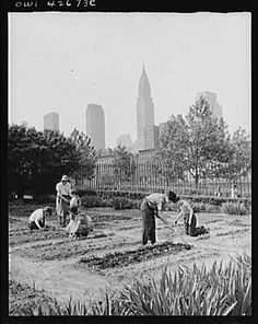 Victory Gardens » The 1940's •