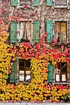 yellow and red vines on building facade with turquoise shutters Beautiful World, Beautiful Places, Terraria, Mellow Yellow, Oh The Places You'll Go, Windows And Doors, Belle Photo, Pretty Pictures, Wonders Of The World