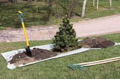 Transplanting Trees And Shrubs: How And When To Move Trees In Landscape