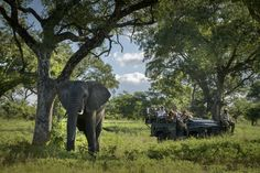 Formerly the family home of Singita founder Luke Bailes' grandfather, Singita Castleton is an exclusive use lodge set within acres of private reserve. Field Guide, Maine House, Rustic Chic, Quality Time, Lodges, South Africa, Home And Family, Elephant, Villa