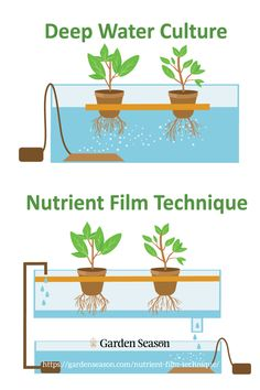 Deep Water Culture | Nutrient Film Technique | Aeroponics | Drip System