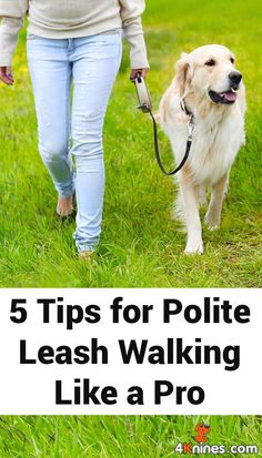 Polite leash walking can be a frustrating endeavor for many dogs and owners. These tips will help ensure your dog is practicing good manners, that is without the struggles of dragging and pulling, during your walks. #HugsAndKisses101