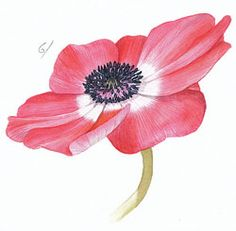 Paint a botanical watercolour anenome step-by-step with Billy Showell Art And Illustration, Botanical Illustration, Watercolor Flowers Tutorial, Watercolour Tutorials, Watercolor Disney, Watercolor Paintings, Watercolors, Nature Collection, Painting Lessons