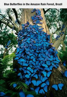 Blue Butterflies In The Amazon Rainforest photography beautiful nature forest butterflies photography ideas photography pictures