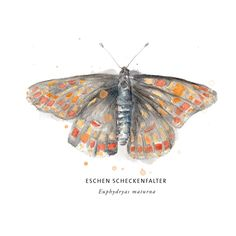 Eschen Scheckenfalter Portfolio Design, Moth, Illustration, Animals, Paper Mill, Random Stuff, Portfolio Design Layouts, Animales, Animaux