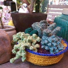 #crochet succulents by oak herder using pattern from planetjune