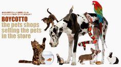 各地にあるペットショップで子犬や子猫、鳥、ウサギ、魚・・・たくさんの可愛い子達が値段をつけられ、販売されています。その裏でどれほどの命が残酷な運命を背負って生れ、そして亡くなっているかご存知の方も少なくないと思います。   小さなアクションかもしれませんが、あなたの家族のためにちょっとしたおやつを買っているペットショップで、もし動物達がショーケースに入って販売されていたら、そのお店の利用をボイコットしてください。   そのお店が生体販売を辞めた時点で、また利用を再開しようじゃありませんか。   私たちはこの署名を各店舗・企業へ届けます。耳を傾けるかどうかは企業姿勢です。聞き入れられなかったとすれば、そんな残酷な思想を持つお店から、愛する家族のおやつやご飯を買う気にもならない。   動物を売らなくても、より良いグッズや質の高い食べ物、人と動物との素敵な生活スタイルなどを追及し、より良い関係のための未来を作ってもらうことは出来るはずです。15歳以下の子供よりもペットの数が多いこの国で、やってやれないことはないはずです。…