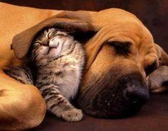 Mrrr. My favorite dog breed with ears like blanket.