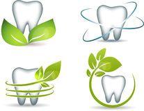 Dentes e folhas Fotografia de Stock Royalty Free