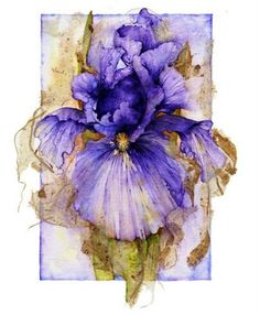 Iris watercolor.  Foreign website has gorgeous pictures