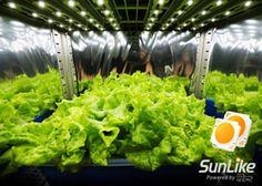 La société Seoul Semiconductor a annoncé les résultats d'une série d'expériences qui ont démontré un taux de croissance plus élevé et une teneur en flavonols (antioxydant) supérieure dans les plantes cultivées sous les LED à spectre naturel – série SunLike – que celles cultivées sous les LED blanches standard.
