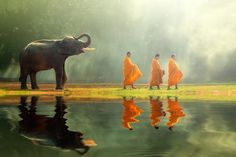 Monk alms round and young elephant - Monk alms round and young elephant