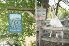 Wedding Goat | Monadnock Berry Farm | Troy, NH