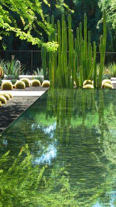 jardin paysager, paysager son jardin avec grands cactus