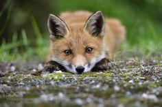 See you around by snufkin21 #animals #animal #pet #pets #animales #animallovers #photooftheday #amazing #picoftheday