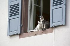 High-rise syndrome and the feline pancreas