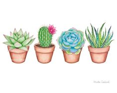 Ideas for succulent art painting cactus Succulents Drawing, Watercolor Succulents, Watercolor Cactus, Watercolor Water, Watercolor Paintings, Succulents Painting, Succulents Art, Watercolor Tattoo, Cactus Painting