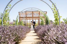 Rose Photography, Northern California, Arch, Lily, Outdoor Structures, Weddings, Bridal, Garden, Longbow