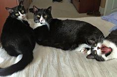 The Tuxedo Trio  - follow them on IG at: @tuxedotrio
