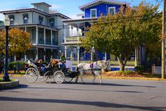 An early autumn horse and carriage ride in Cape May. Fall, foliage, leaves, Cape May Point, Ocean City, Jersey Cape, Cape May County, New Jersey
