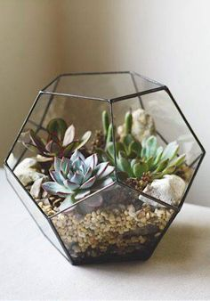 terrario em vaso de pentagonos vidro e metal