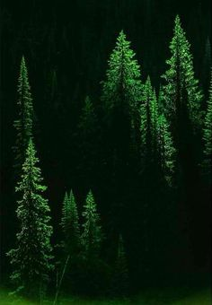 Evergreen… Day Beautiful World. The Magic Faraway Tree, Tree Forest, Evergreen Forest, Forest Light, Night Forest, All Nature, Belle Photo, Shades Of Green, Beautiful World