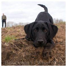 Labrador Pup Boudewijn Olthof on Flickr