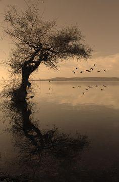 Reflection from Gölyazı
