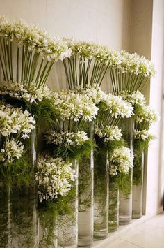 massed glass cylinder vases filled with white blooms//