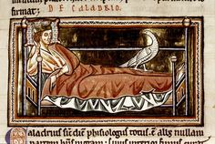Medieval Imago & Dies Vitae Idade Media e Cotidiano    Bestiary (known as 'The Ashmole Bestiary'). Country or nationality of origin: English. Place of origin: Peterborough (?). Date: 13th century, beginning. Image description: Detail. Caladrius (mythical bird) on king lying in bed..