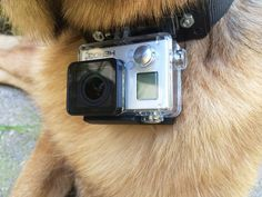 GoPro Dog Collar #pet #point_of_view #leash