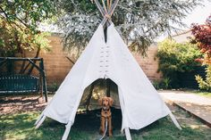 Roux (my Irish Setter - Golden Retriever mix puppy) posing in the teepee at Ojai Rancho Inn - awesome hotel in Ojai, California on our road trip   Emilie Waugh Photography