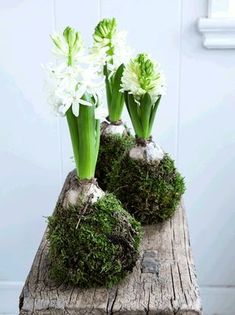 Drop vaser og potter, og pak i stedet dine blomster på løg ind i dekorativ mos. Få en trin-for-trin guide til de fine hyacintkugler her