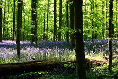 Forêt de Soignes Belgique