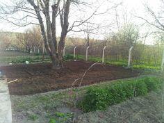 Çim hazırlığı