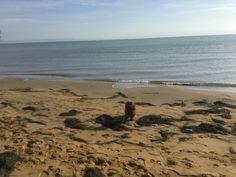 Mehr als 10 km Strand in der Nebensaison Am Meer, Strand, Beach, Water, Outdoor, Nature Reserve, Vacation, Pet Dogs, Animals