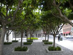 Trees of Americas Grove: Pollarding Trees - American Grove London Plane Tree, Pocket Park, Street Trees, Shade Trees, Hydroponics, Light Shades, Landscape Design, Sidewalk, Urban