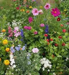 Cosmos, Zinnias, Cornflowers...perfect little cottage garden.
