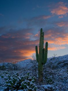 winter Arizona Nature