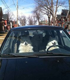 Todos os cachorros neste carro.