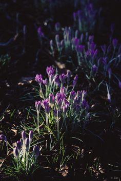 Lavendel Pflanzen ? Tipps Zur Richtigen Pflege Im Garten Oder Im ... Lavendel Pflanzen Tipps Pflege