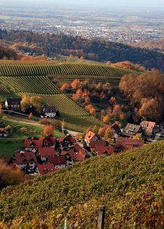 Baden vineyards in fall (Germany)