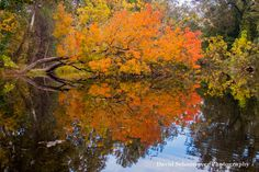 Photo: Autumn Reflections, Chico Creek, Bidwell Park