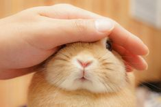 something special ♡ Cute Baby Bunnies, Cute Cats, Cute Babies, Funny Rabbit, Pet Rabbit, Fluffy Animals, Animals And Pets, Netherland Dwarf Bunny, Beautiful Rabbit