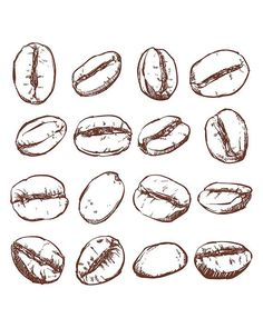 80% Off Sale Coffee bean Isolated Hand drawn vector. Hand drawn Coffee vector… #coffeeart