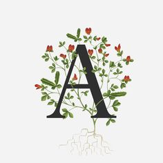 A fascination for all things floral and specialised in creating beautiful botanically inspired illustration. Flower Typography, Typography Alphabet, Plant Painting, Painting & Drawing, Botanical Illustration, Illustration Art, Micro Photography, Watercolor Kit, Flower Meanings
