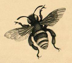vintage bee illustration...